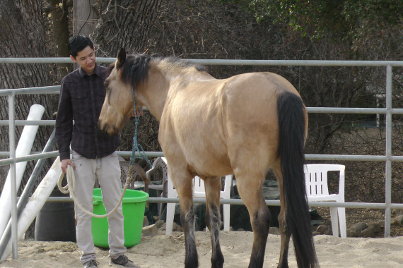 Young Man in Equine Therapy During Dual Diagnosis Treatment