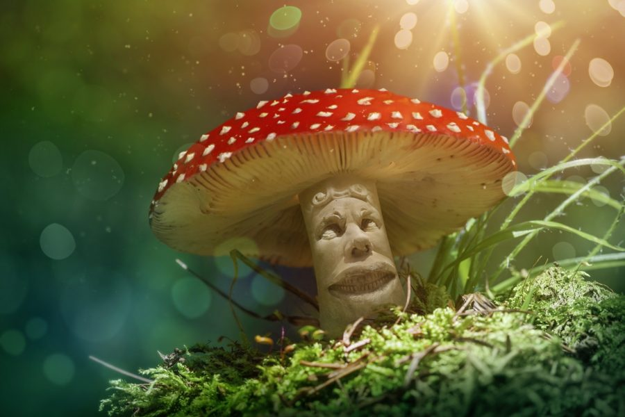 Magic Mushrooms For Addiction