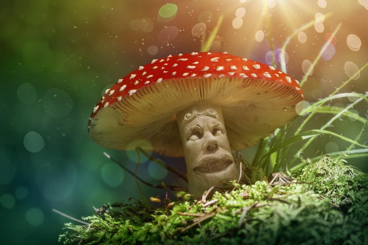 Images Of Magic Mushrooms